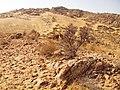 Alxa Zuoqi, Alxa, Inner Mongolia, China - panoramio (27).jpg