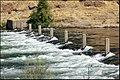 Am. River at Nimbus Dam 969 - panoramio.jpg