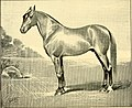 American horses and horse breeding - a complete history of the horse from the remotest period in his history to date. The horseman's encyclopedia and standard authority on horses, embracing breeds, (14598299518).jpg