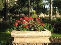 Amin al-Islami Park - Trees and Flowers - Nishapur 043.JPG
