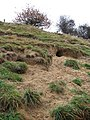 Animal burrows in railway embankment - geograph.org.uk - 1062371.jpg