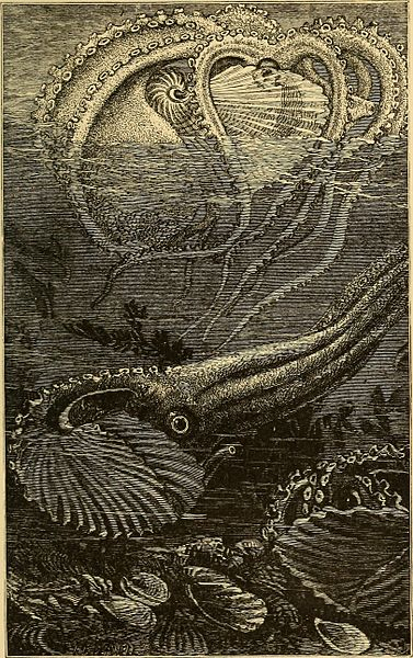 File:Animal life in the sea and on the land (1887) (14593926557).jpg