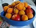 Apricots peaches.JPG