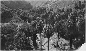 Agua Caliente Band of Cahuilla Indians - Aqua Caliente Reservation in 1928