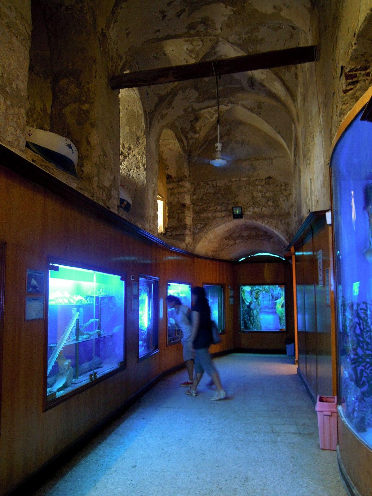 ع انواع  متحف الأحياء المائية - ويكيبيديا، الموسوعة الحرة