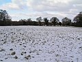 Arable field in snow - geograph.org.uk - 100997.jpg