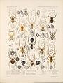 Arachnida Araneidea Vol 1 Table 24.jpg