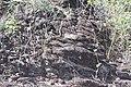 Araguainha - State of Mato Grosso, Brazil - panoramio (710).jpg