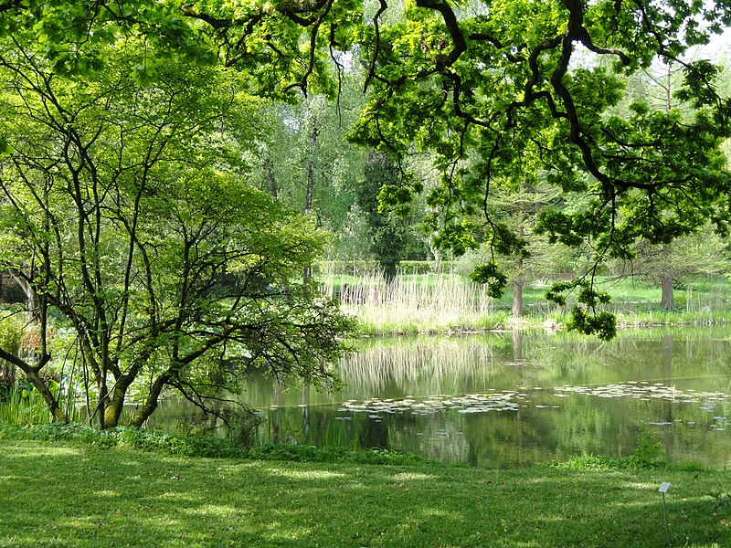 file arboretum botanischer garten m nchen nymphenburg dsc07584 jpg. Black Bedroom Furniture Sets. Home Design Ideas