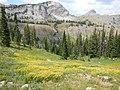 Arnica longifolia (29135004701).jpg
