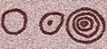 Arte esquemático-Petroglifoide círculos.png