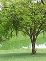Arvore em Lago de Petropolis.jpg