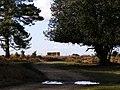 Ashley Cross, New Forest - geograph.org.uk - 148830.jpg