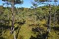 Askvikmyra-lite-Birgit-Broso.jpg