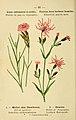 Atlas de poche des plantes des champs, des prairies et des bois (PLATE 66) (6022008821).jpg