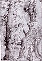 Aurelio Luini - Studies of Trees - WGA13745.jpg