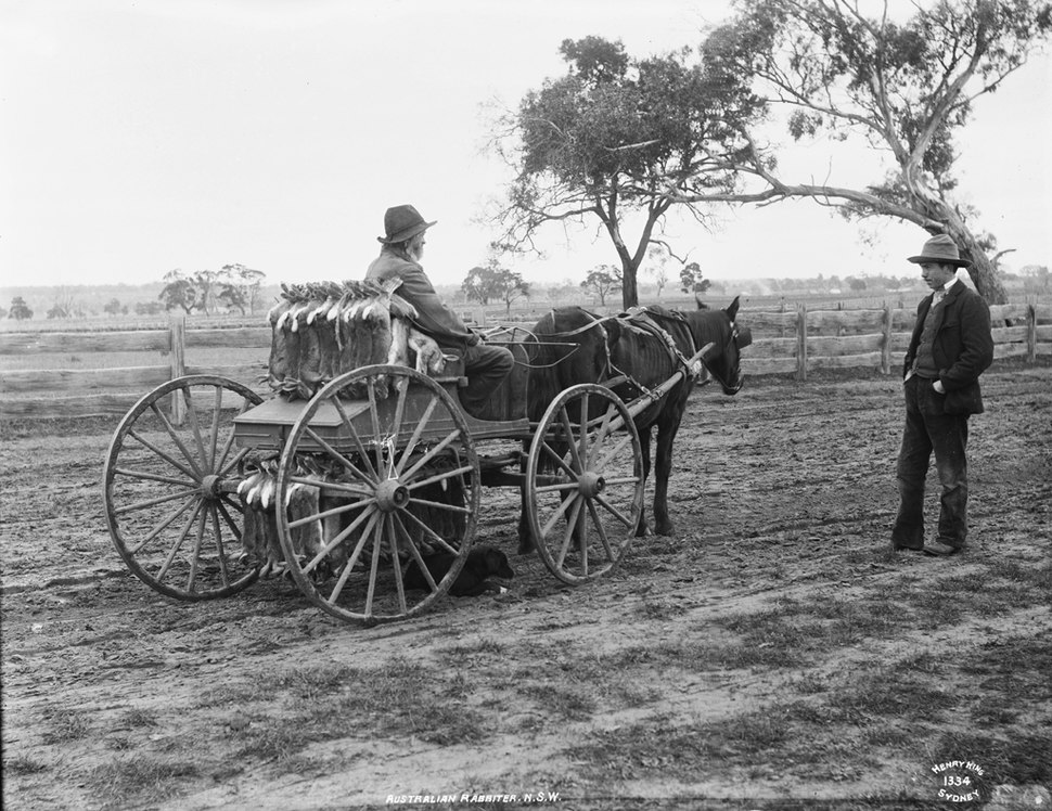 Australian rabbiter, NSW from The Powerhouse Museum Collection