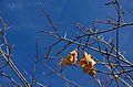 AutumnTreeLonelyLeaves2.jpg
