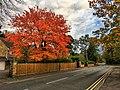 Autumn (29853434254).jpg