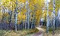 Autumn Calgary Alberta (15) (8168770359).jpg