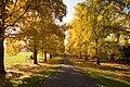 Autumn driveway in Newberg, Oregon.jpg