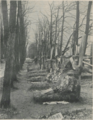 Aviators alley at Fraternal Cemetery 1925.png