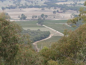 Pyrenees (Victoria) - Vineyards near Avoca, viewed from the Pyrenees ranges