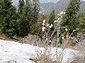 Ayubia Abbottabad snow.jpg