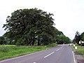 B1203-B1225 Junction - geograph.org.uk - 186060.jpg