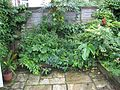Back garden - Flickr - peganum.jpg