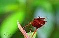 Bee Nectaring.jpg