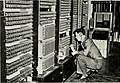 Bell Laboratories relay computer for U.S. Army (1946).jpg