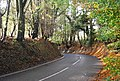 Bend in Powdermill Lane - geograph.org.uk - 1576640.jpg