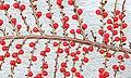 Berries (32181806685).jpg