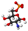 Beta-D-glucosamine-6-phosphate-3D-balls.png