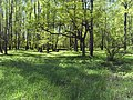Bezhitskiy rayon, Bryansk, Bryanskaya oblast', Russia - panoramio (165).jpg