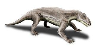 Therapsid - Biarmosuchus, a biarmosuchian