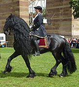 cheval espagnol noir