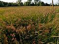 Biodiversitätsprojekt Schmuttertal, Natura2000, Schutzgebiet.jpg