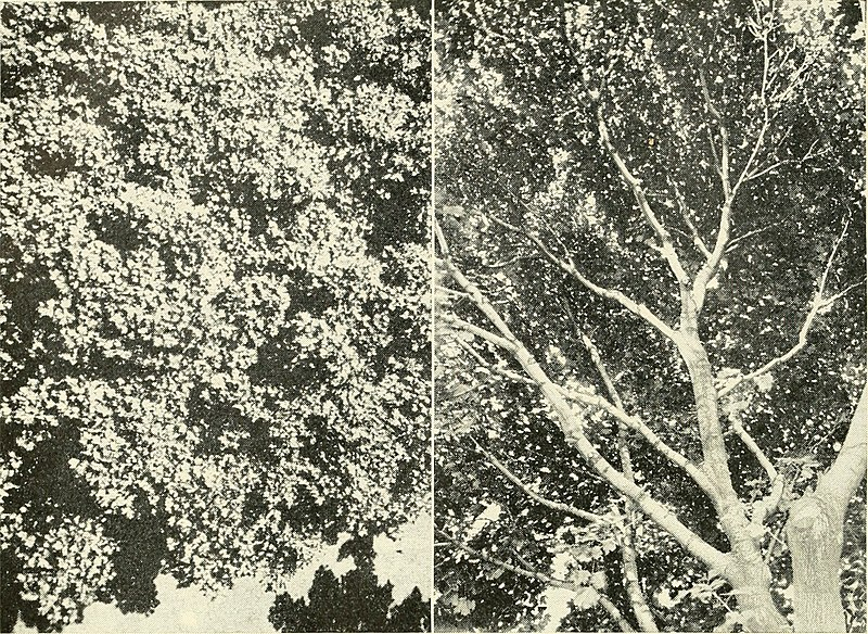 File:Biology and man (1944) (20194959008).jpg