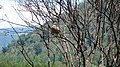 Bird - panoramio - Rodrigo SanSs.jpg