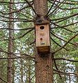 Bird house (33342103100).jpg