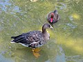 Birds Garden of Isfahan (33).jpg