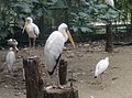 Birds in Zoo Negara Malaysia (15).jpg