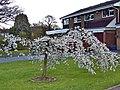 Birmingham Spring - panoramio (1).jpg