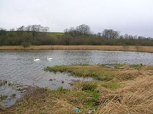 Blae Loch, Beith - The northern end with resident swans.
