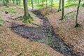 Blomberg - 2015-06-14 - Diestelbach (Blomberger Wald) (8).jpg