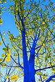 Blue Tree In Leaf CloseUp Dimopoulos.jpeg