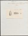 Boa amethystina - kop - 1837 - Print - Iconographia Zoologica - Special Collections University of Amsterdam - UBA01 IZ11800238.tif