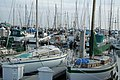 Boats at Monterey (3480134720).jpg